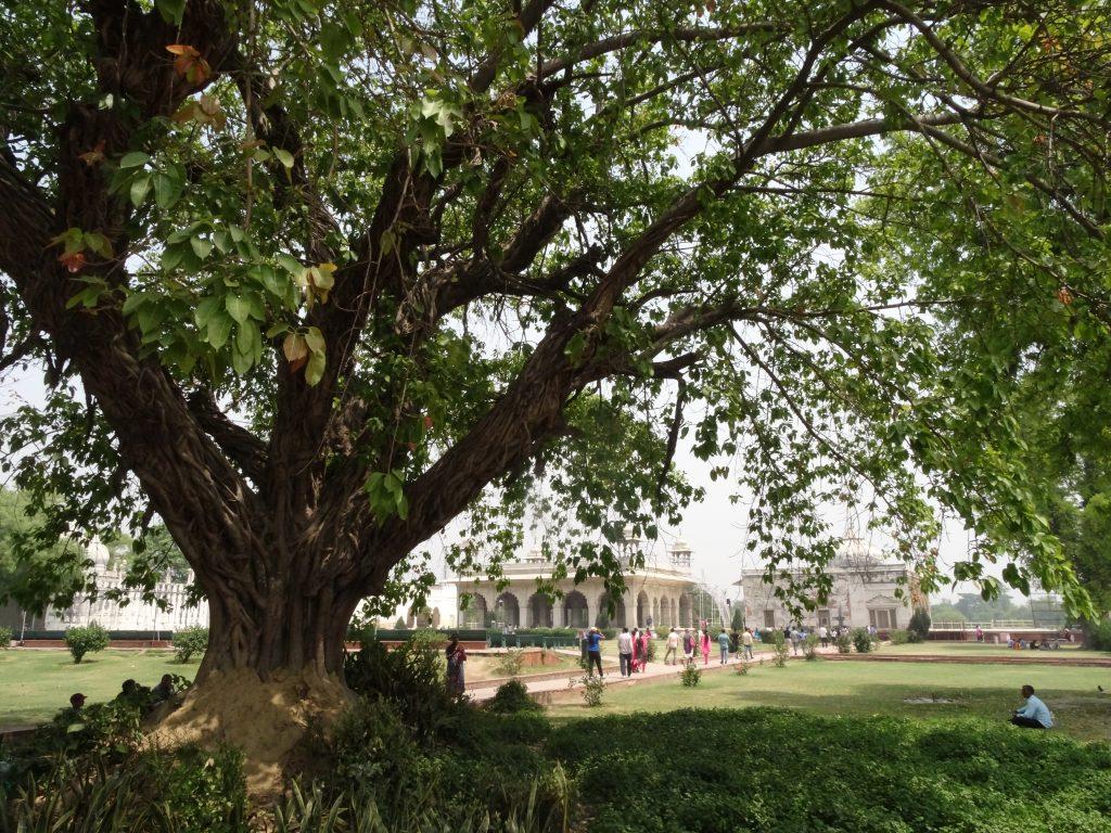 A l'ombre d'un arbre centenaire, vue sur les jardins du Fort Rouge - Delhi