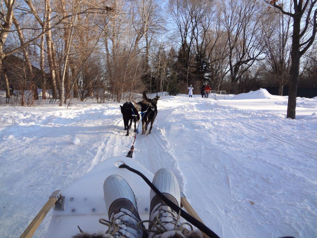 balade en forêt avec des chiens de traineau - Parc Jean Drapeau à Montréal