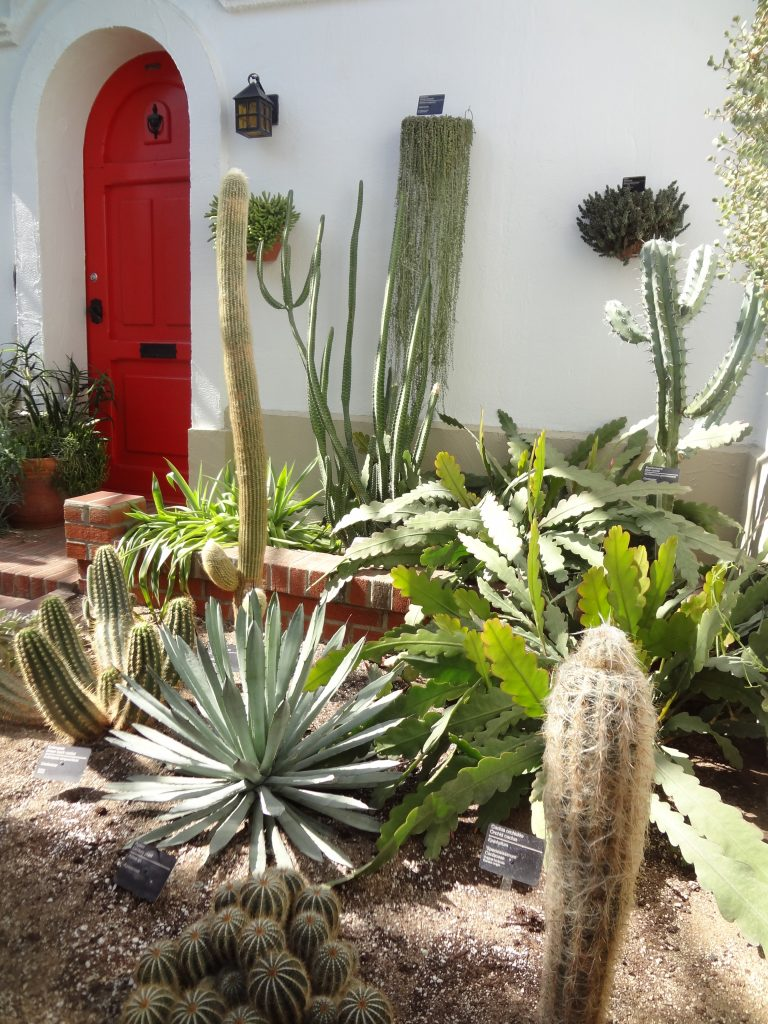 jardin de cactus avec uen porte rouge en arrière plan
