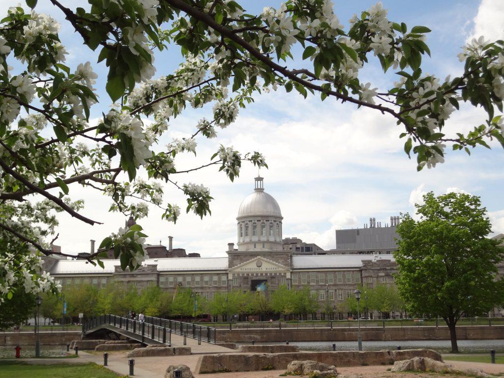 floraison printanière dans la vieux Montréal